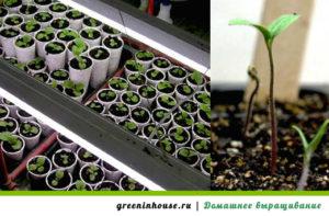 Выращивание и уход за цветами