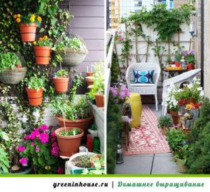 Вьющиеся-растения