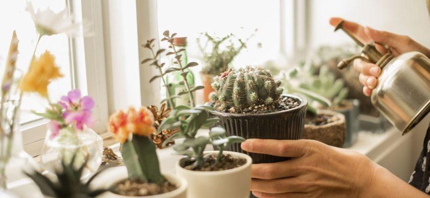 какие цветы можно вырастить на подоконнике