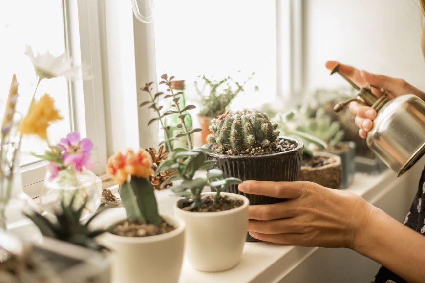 Какие комнатные растения легко вырастить дома из семян