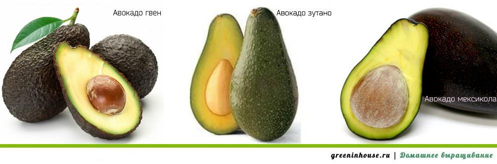 Разновидности авокадо