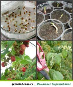 От семян до первого урожая
