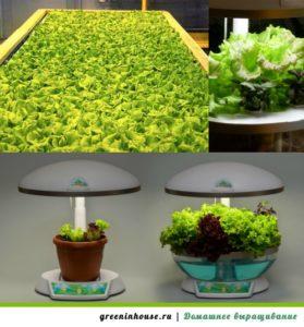 Освещение для выращивания салата