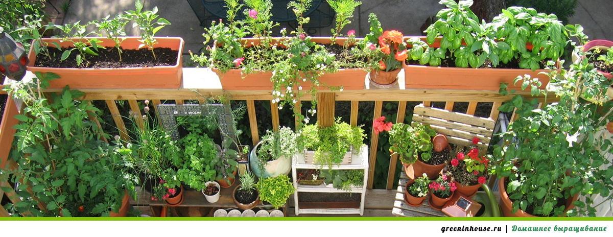 Балкон овощей