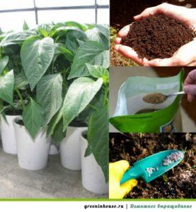 Выращивание рассады перца, удобрение
