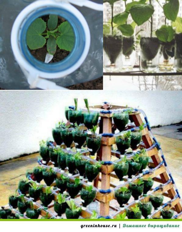 Выращивание огурцов в пластиковых 5 литровых бутылках выращивание 18