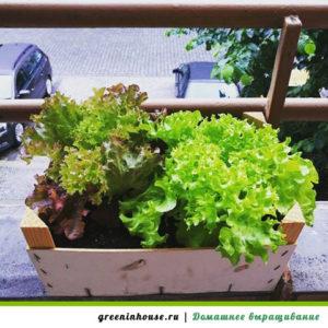 Зелень на балконе: как посадить?.