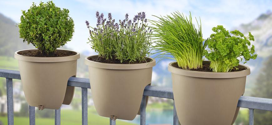 Как вырастить зелень на балконе
