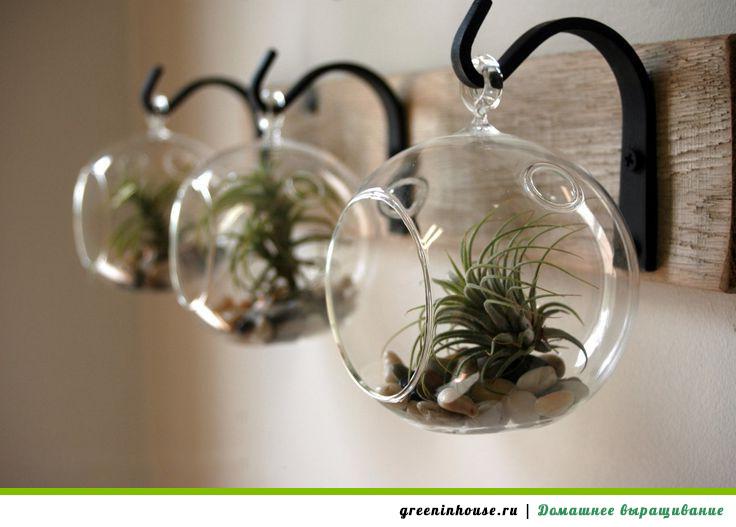 Растения без грунта