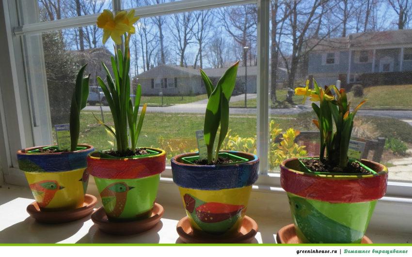 Какие садовые цветы можно выращивать на подоконнике?