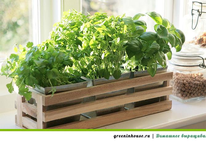 Вариант декорирования емкости для выращивания пряных трав