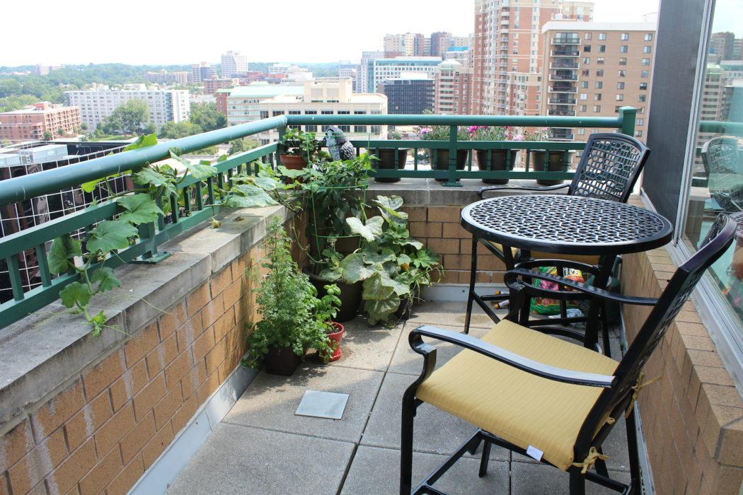 Огурцы на балконе не растут и пускают пустоцвет причины лечение