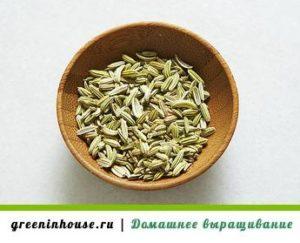 semena-rozmarina