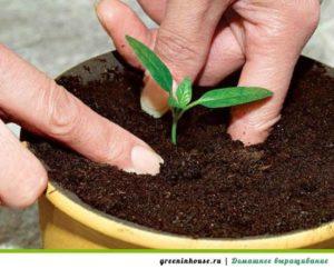 Подготовка почвы и посев семян