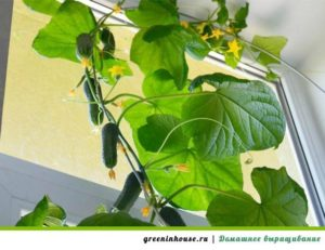 Формирование растения и урожайность