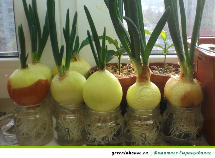 Почвогрунт или гидропоника: нюансы посадки