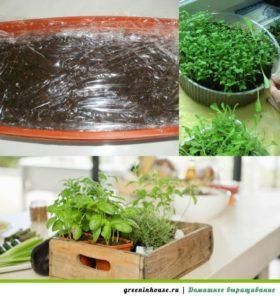 process-vyrashhivaniya-zeleni