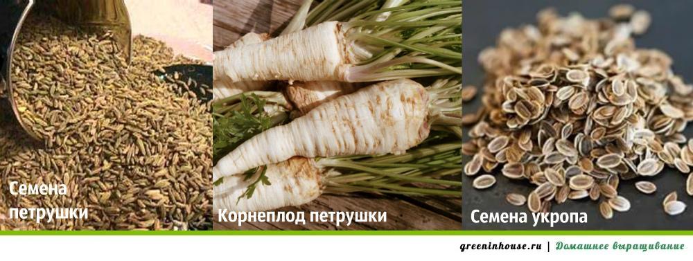 semena-zeleni