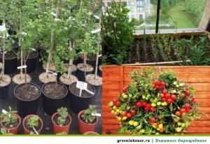 емкости для растений