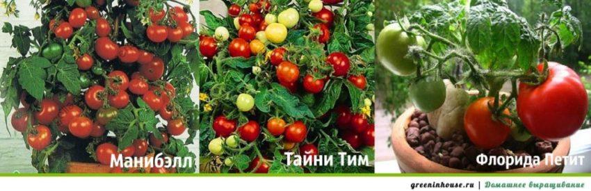 Комнатные сорта томатов