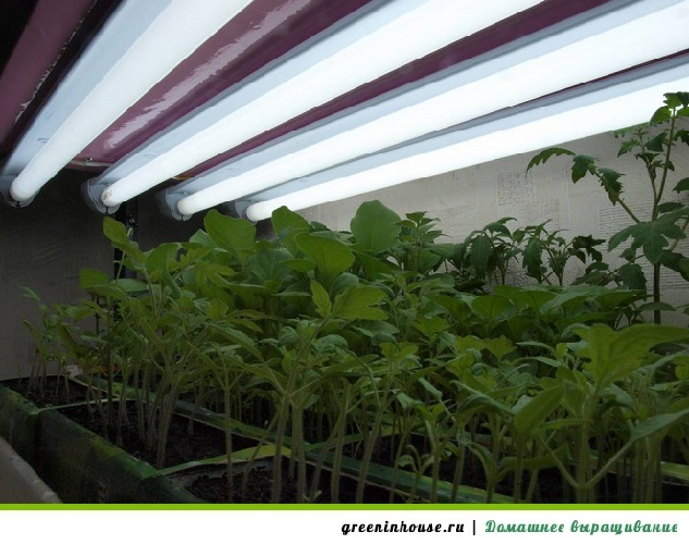 Люминесцентные лампы для рассады