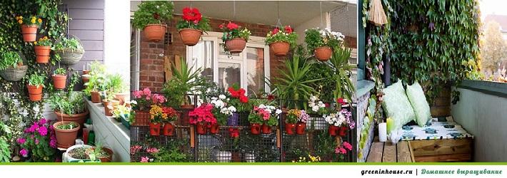 озеленение балкона цветами