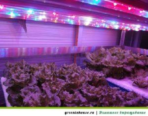 светодиодные лампамы для рассады