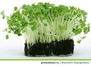 как посадить кресс салат