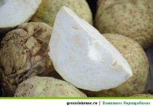 корнеплодный сельдерей
