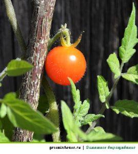 удобрение рассады помидор