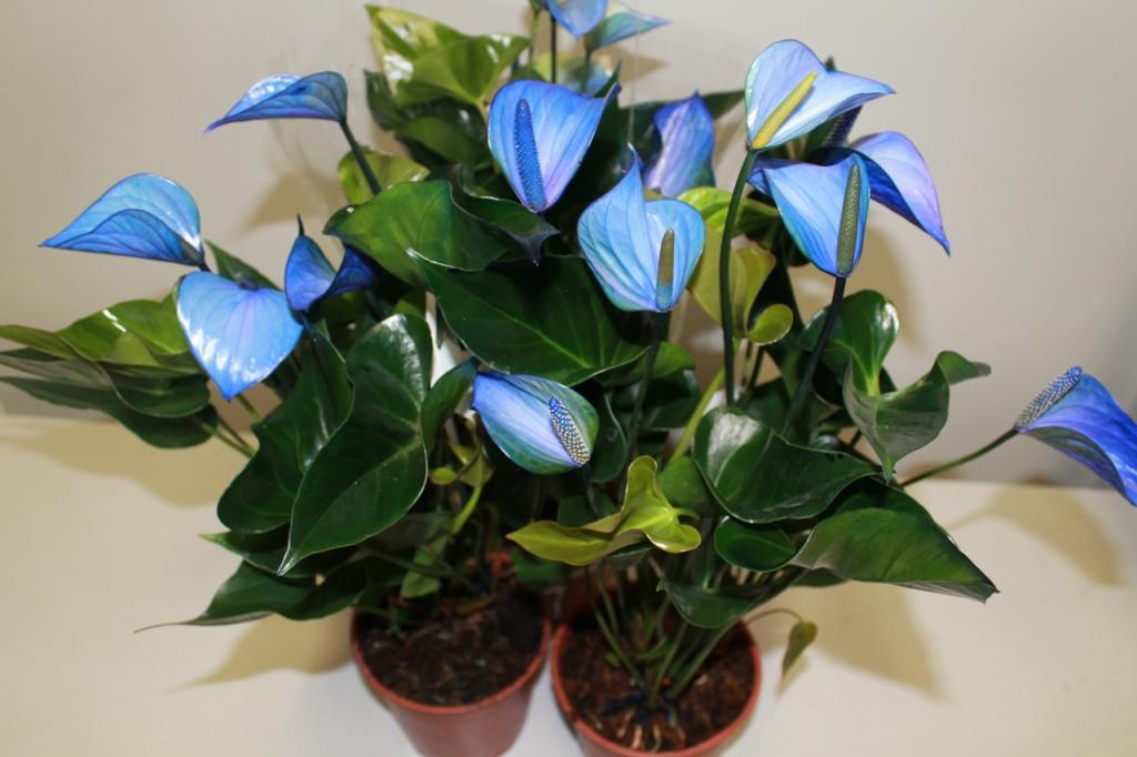 Цветы виды в домашних условиях