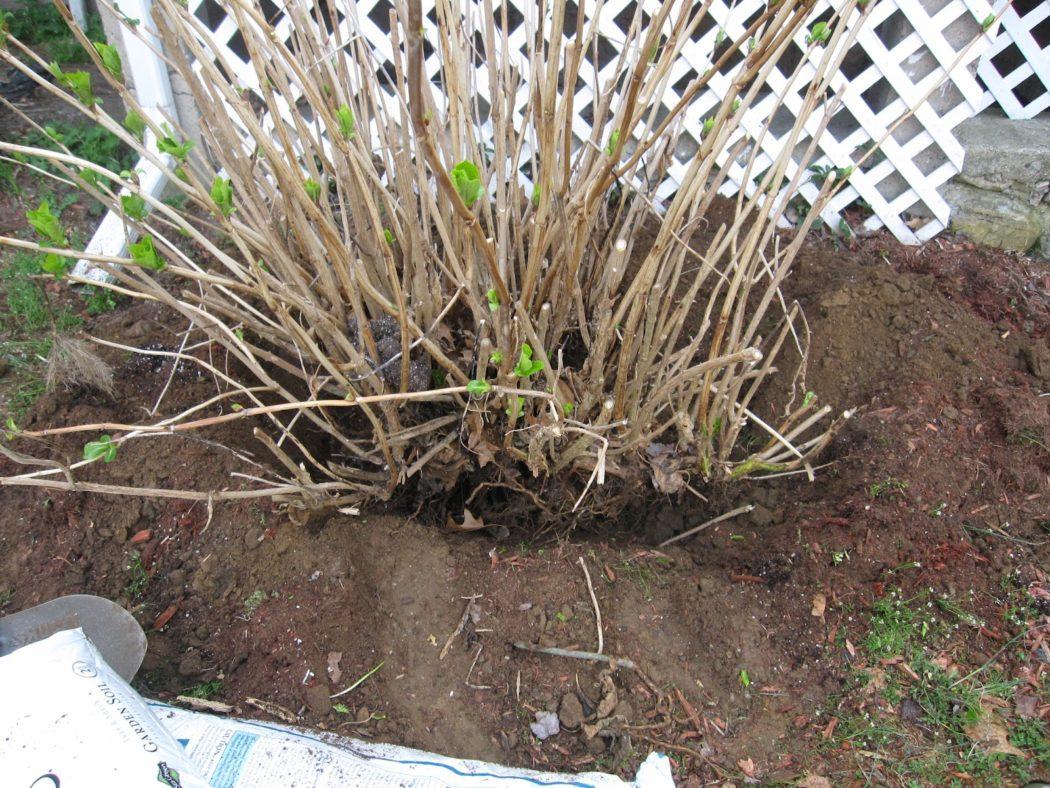 Когда сажать газонную траву, весной 30