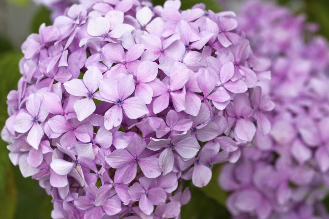 полить цветы железом