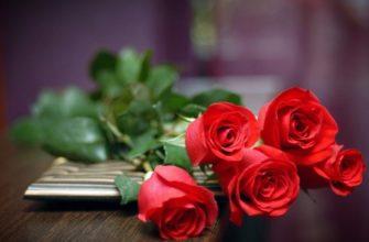 как укоренить розу